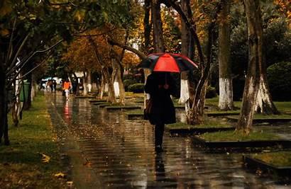 Rainy Cambridge Enjoy Rain Trees Photographer