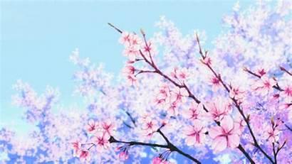 Cerezo Flores Primavera