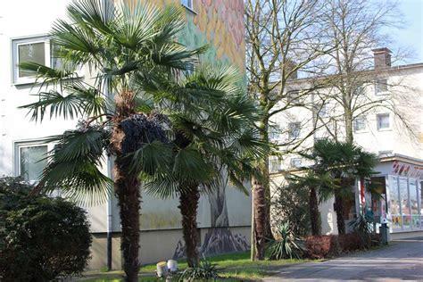 Garten Kaufen Heidelberg by Wird Es Etwa Auch In Deinem Garten Bald Palmen Zu Sehen Geben