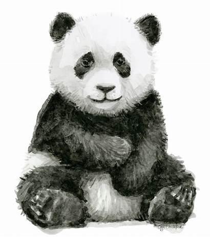 Panda Watercolor Shvartsur Olga Transparent