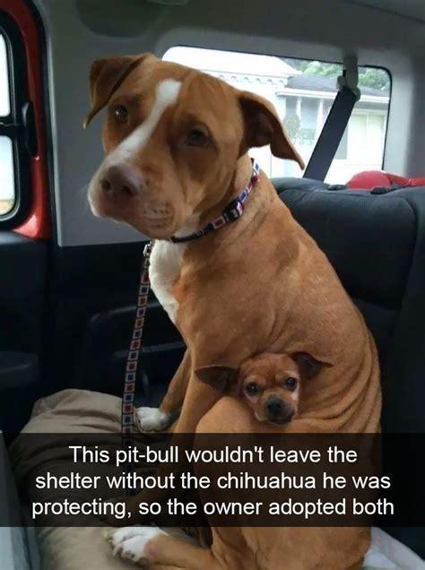pawsome dog snapchats   impossible