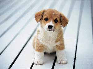 cute puppy wallpaper funny