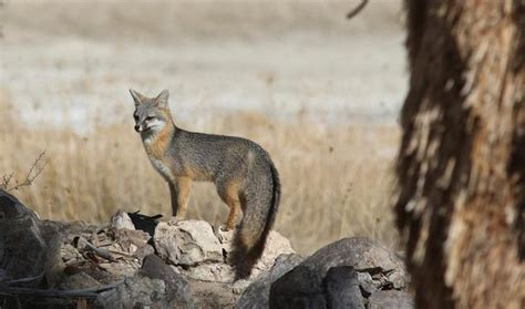 protect ca  trump supported desert water mining