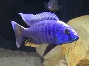 Aquarium Fische Süßwasser Liste : alle s wasser aquariumfische von a bis z ~ Watch28wear.com Haus und Dekorationen