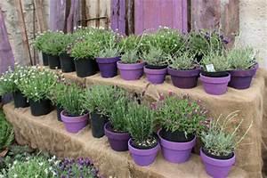Lavendel Pflanzen Im Topf : lavendel pflanzen dr schweikart ~ Frokenaadalensverden.com Haus und Dekorationen