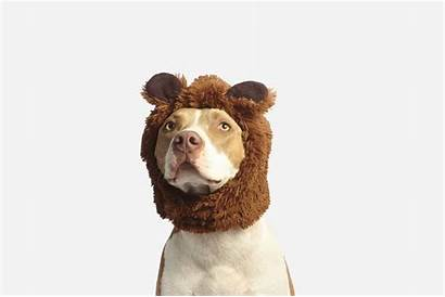Puns Dog Funny Hilarious Puppy