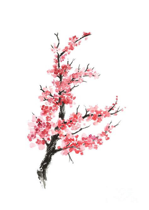 Cherry Blossom Branch Watercolor Poster Painting by Joanna