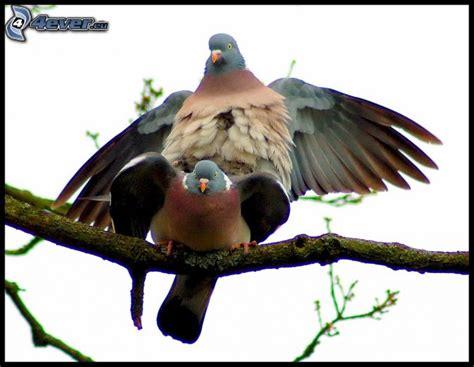 how do birds mate mating