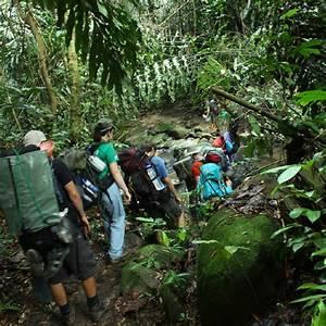 » Jungle Trekking in Kiulu, Sabah