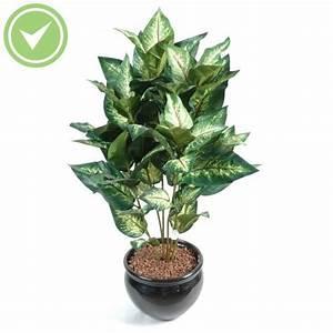 Plante D Intérieur Pas Cher : plante verte d 39 int rieur pas cher maison et fleurs ~ Dailycaller-alerts.com Idées de Décoration