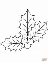 Holly Coloring Pages Christmas Drawing Mistletoe Xmas Printable Simple Template Leaves Berries Leaf Sheets Ben Dot Sketch Bestcoloringpagesforkids Decorations Leave sketch template