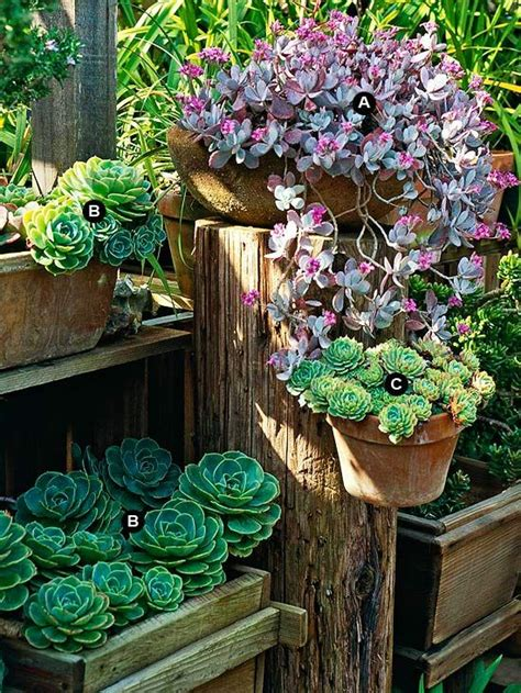 succulent containers succulent container garden plans succulents succulent containers and container garden