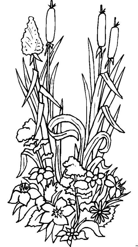 viele verschiedene graeser ausmalbild malvorlage blumen