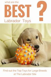 best dog toys for large breeds With the best dog toys for dogs who chew