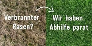 Rasen Düngen Herbst : rasen im herbst d ngen wann wie womit rasen ~ Watch28wear.com Haus und Dekorationen