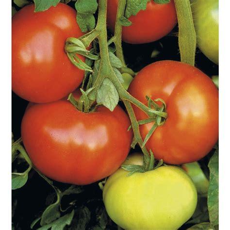 shop 3 quart s tomato assortment plant l14917 at lowes