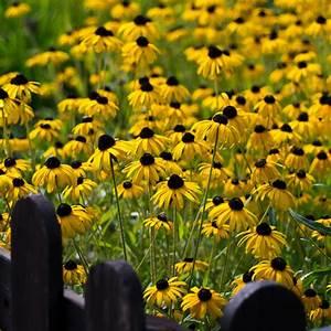 Sonnenhut Pflanze Kaufen : naturagart shop sonnenhut gelb schwarz online kaufen ~ Buech-reservation.com Haus und Dekorationen