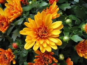 gardenia flower jardines flores de otoño invierno