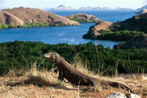 tourism  komodo island   controlled official