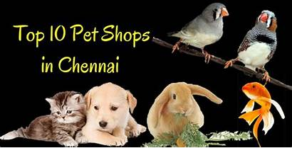 Pet Shops Chennai Pets Dogs Tamed