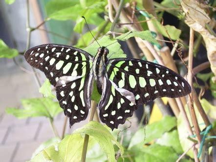 Botanischer Garten München Exotische Schmetterlinge by Finu S Homepage