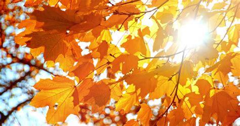 sun shining  fall leaves stock footage video