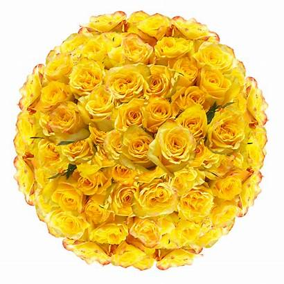 Flowers Mother Yellow Delivered Roses Mothers Rose