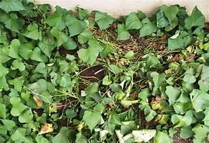 Roots  U0026 39 N U0026 39  Shoots  Sweet Potato  How To Grow