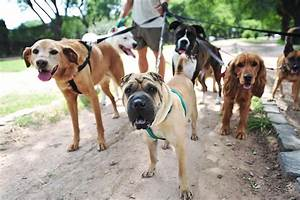 How to start a dog walking business for Puppy dog walker