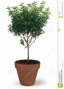 Arbre En Pot : arbre mis en pot image libre de droits image 1143486 ~ Premium-room.com Idées de Décoration