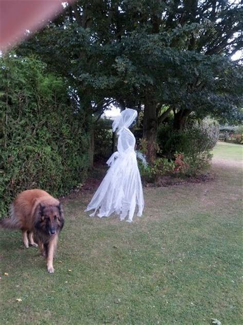 chickenwire ghost halloween chicken wire ghost dressed in cheesecloth view 4 haunted high pinterest awesome