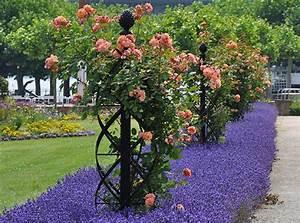 Rankhilfe Für Kletterrosen : classic garden elements rosenbogen rosenb gen ~ Michelbontemps.com Haus und Dekorationen