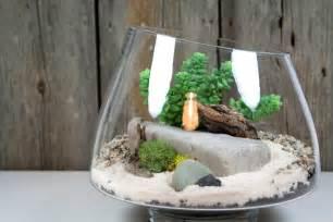 Terrarium Plants Succulents