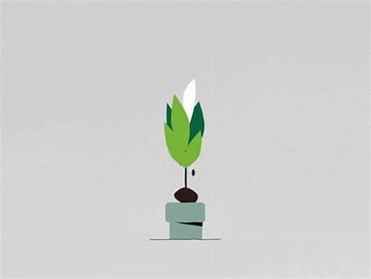 Plant Dribbble Motion Seeds Pixel Animation Community