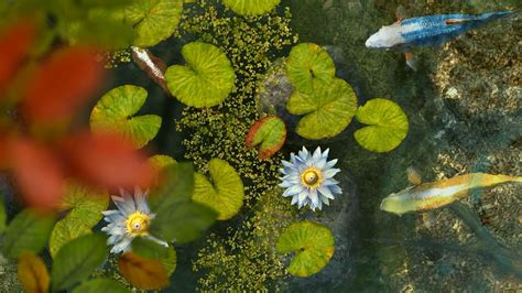 Animated Koi Fish Wallpaper - koi fish 3d wallpaper top backgrounds wallpapers