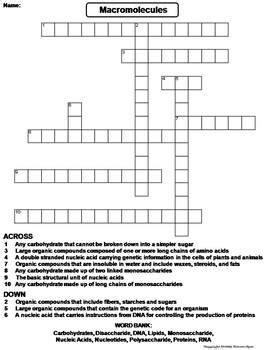 Macromolecules Worksheet Crossword Puzzle By Science Spot Tpt