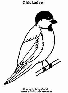 Black Capped Chickadee Drawing At Getdrawingscom Free