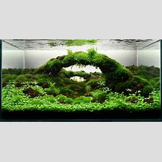 Moko Aquascape Shop Gallery