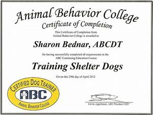 cesky terriers price online dog training certificate With dog training certification