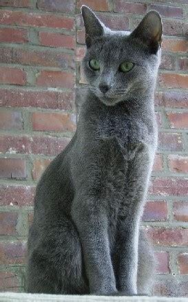 kucing biru rusia wikipedia bahasa indonesia