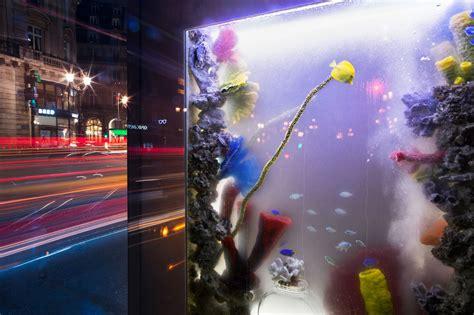ubi bene installe des aquariums pour nat g 233 o actus m 233 dias co