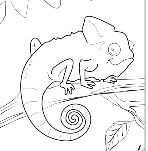 mixed up chameleon coloring page coloring home
