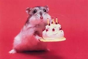 Happy Birthday Maus : gb die kleine maus plauderecke callofdutyseries eure community fuer call of duty und ~ Buech-reservation.com Haus und Dekorationen