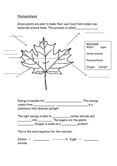 Worksheet Questions On Photosynthesis Rcnschool
