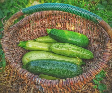 5 Quick Tips 🥒 How to Freeze Zucchini?   Fresh Tips - Beezzly