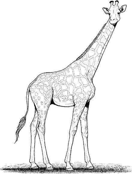 66 best images about coloring-zoo on Pinterest | Coloring