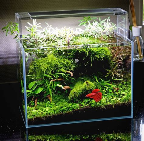 Fish For Aquascape by Beautiful Planted Tank For A Betta With Simple Plants