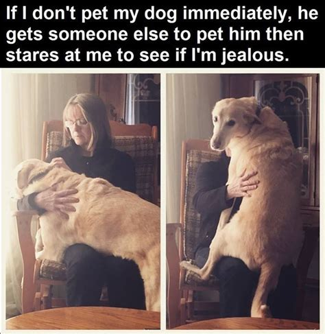 dog    owner jealous pictures