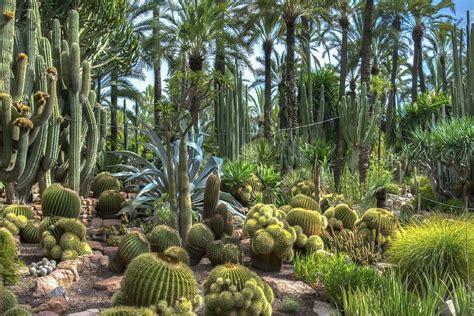 le jardin tropical ou aride jardinerie toulousaine