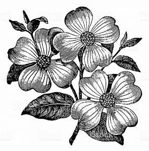 Vintage Clip Art And Illustrations Flower stock vector art ...